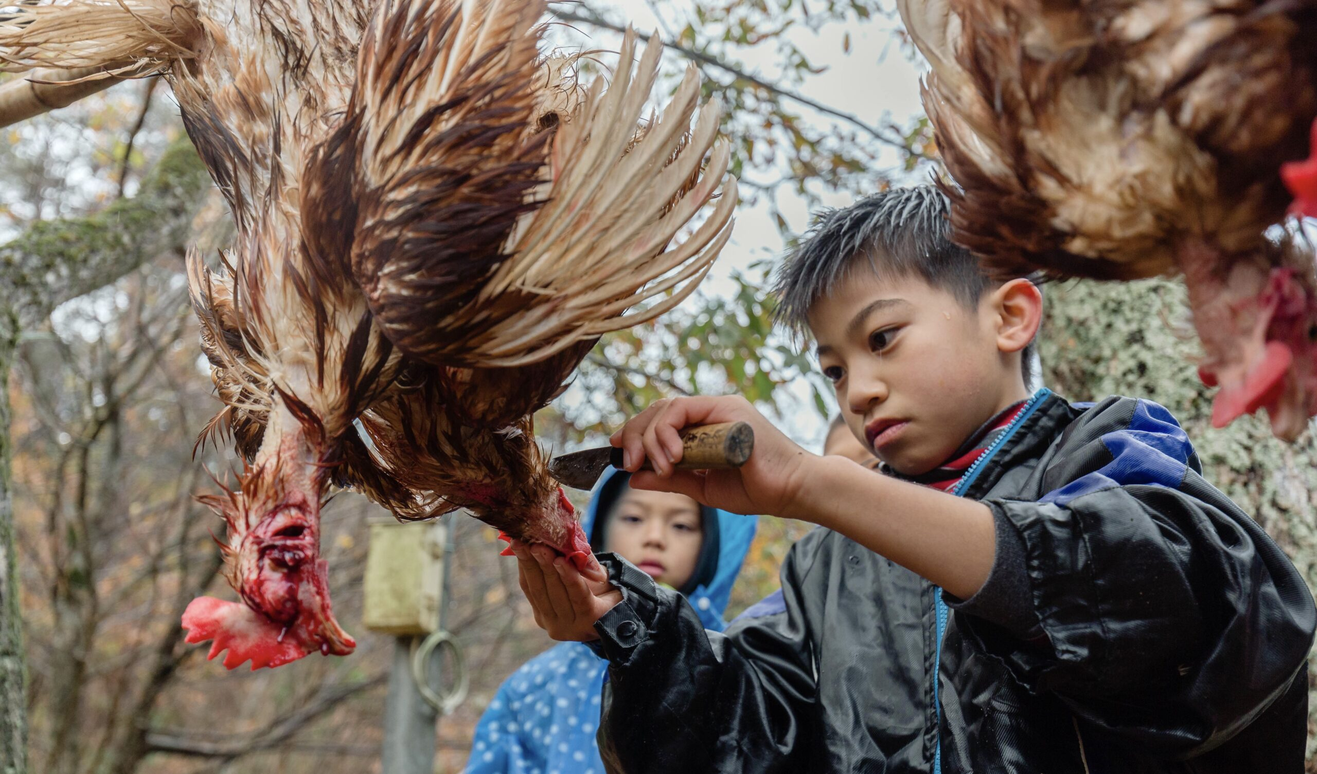 鶏の屠殺・解体体験
